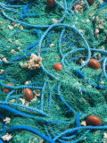 Fishing Nets in Grand Bourg Harbor  Marie-Galante Island  Guadaloupe  Caribbean