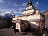 Stupa With Yaks at Dolpo  Nepal
