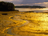 Outgoing Tide at Sunset on Campobello Island  New Brunswick  Canada