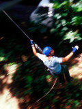 Canopy Walking in Morne Trois Pitons National Park  Dominica  Caribbean