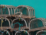 Fish Sheds and Lobster Pots  Malpeque Harbour  Prince Edward Island  Canada