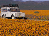 4X4 in Meadow of Daisies  South Africa