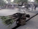 Selling Sugar Cane  Vietnam