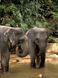 Asian Elephants in Khao Yi National Park  Thailand