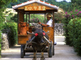 Water Buffalo Cart  Taketomi Island  Okinawa  Japan