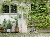 Courtyard off Psoriases  Graz  Styria  Austria