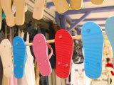 Beach Shoes  Bourg Des Saintes  Grande Terre  Guadaloupe  Caribbean