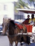 Horse Carriage along Bay Street  Nassau  Bahamas  Caribbean