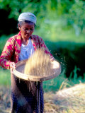 Woman Separates Rice From Hulls  Bali  Indonesia