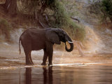 Elephant at Water Hole  South Africa