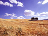 After Wheat Harvest in the Hills surrounding Siena  Tuscany  Italy
