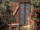 House with Summer Roses  Vaucluse  France