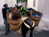 Pack Mule at Market  Santorini  Greece