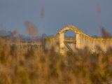Grasses surrounding Corral Bullring  Camargue  France