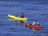 Family Exploring the Monterey Bay  California  USA