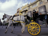Horse Drawn Carriage  Plaza de America  Sevilla  Spain