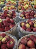 Macintosh Apples in Baskets  New York State  USA