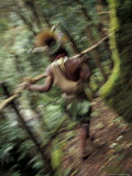 Huli Wigman on Forest Trail  Papua New Guinea