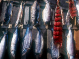 Chukchi People Dry Fish for the Long Winters  Russia