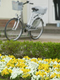 Flowers and Bicycle  Warnemunde  Germany