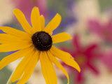 Garden Flower  Washington  USA