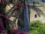 Plams  Flowers and Ramparts of Alcazaba  Malaga  Spain