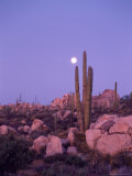 Moonset Desert Scenic and Boojum Cactus  Catavina  Mexico