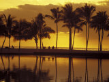 Couple  Palm Trees and Sunset Reflecting in Lagoon at Anaeho'omalu Bay  Big Island  Hawaii  USA