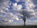 Single Tree and Clouds  Shelby County  Kentucky  USA