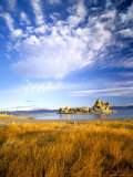 Altocumulus Clouds above Rushes and Tufa on Shore of Mono Lake  California  USA
