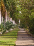 Sidewalk Lined with Palm Trees  Miami  Florida  USA