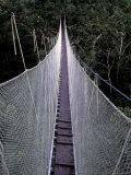 Canopy Walkway in the Peruvian Rainforest  Sucusari River Region  Peru