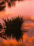 Sunrise Reflection in Swampy Wilderness  Wakodahatchee Preserve  Florida  USA