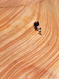 Wave Rock Formation in Coyote Buttes  Paria Wilderness and Vermillion Cliffs  Arizona  USA