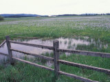 Weippe Prairie National Historic Landmark  Lewis and Clark Trail  Idaho  USA