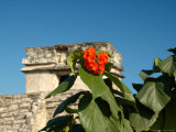 Ruins with Orange Flowers  Tulum  Mexico