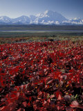 Mt McKinley and Autumn Foliage  Denali National Park  Alaska  USA