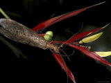 Heliconia and Stone Fly  Machu Picchu  Peru