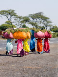 Women Carrying Loads on Road to Jodhpur  Rajasthan  India