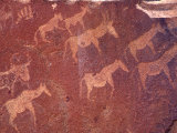 Pictograph  Engravings from Stone Age Culture  Twyfelfonstein Region  Namibia
