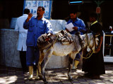 Vet Taking Temperature of Sick Donkey  Brooke Hospital for Animals  Luxor  Egypt