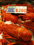 Lobster at Sydney Fish Market  Sydney  Australia