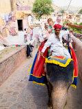 Elephant Rides at Amber Fort  Rajasthan  Jaipur  India