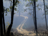 Landscape  Kanha National Park  India