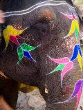 Elephant at Amber Fort  Rajasthan  Jaipur  India