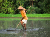 Old Man Farming a Traditional Rice Paddy with Straw Hat  Bali  Indonesia