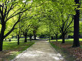 Pathway and Trees  Kings Domain  Melbourne  Victoria  Australia