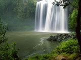 Whangarei Falls  Whangarei  Northland  New Zealand