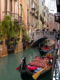 Gondolas Moored along Grand Canal  Venice  Italy