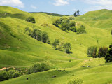 Farmland near Gisborne  New Zealand
